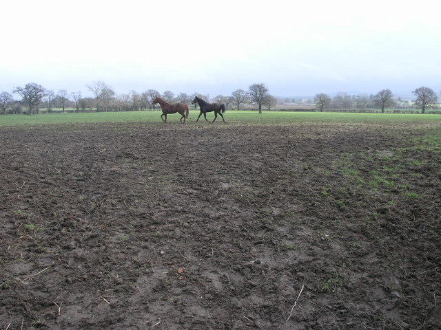 Mud Horses and Trees