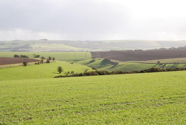 Bottom beside Hydon Hill