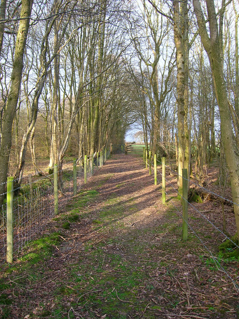Vanguard Way, Kiln Wood
