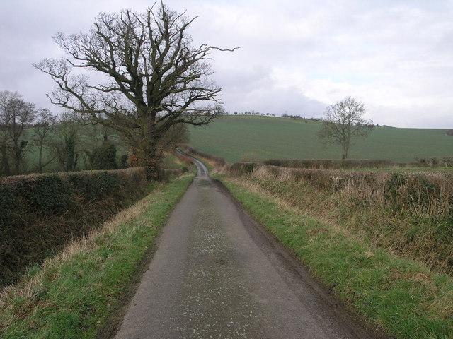 Big Tree Narrow Lane