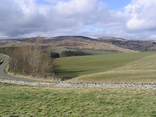 Grazing in the Ettrick Valley