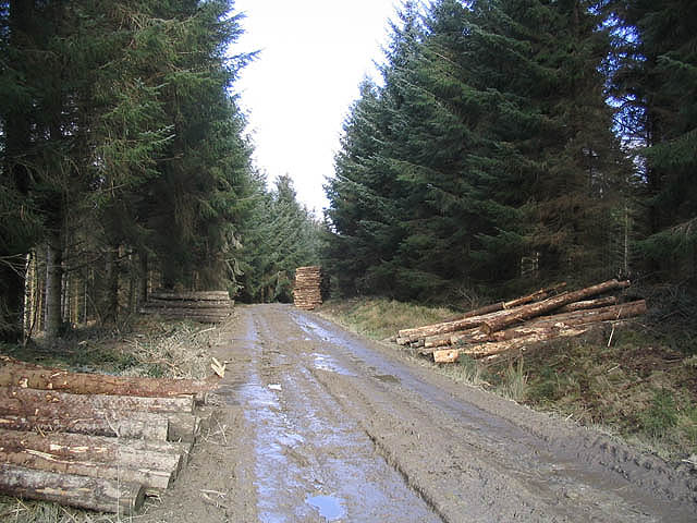 Buccleuch forestry