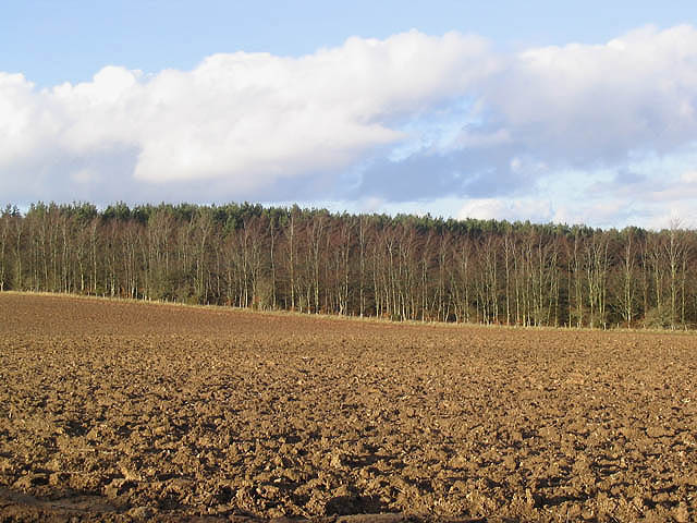 Ploughed field at Bloomfield