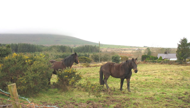 Horses on a smallholding at Bwlch Derwin