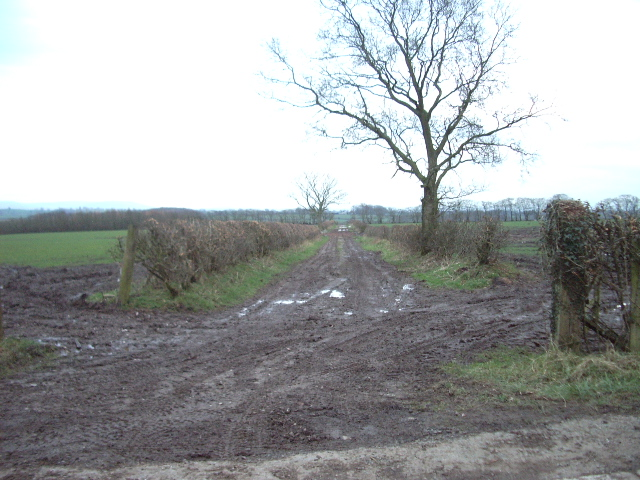 A long straight muddy track opposite Whitecloserigg
