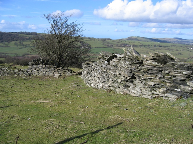 Stone Walls below Moel y Faen