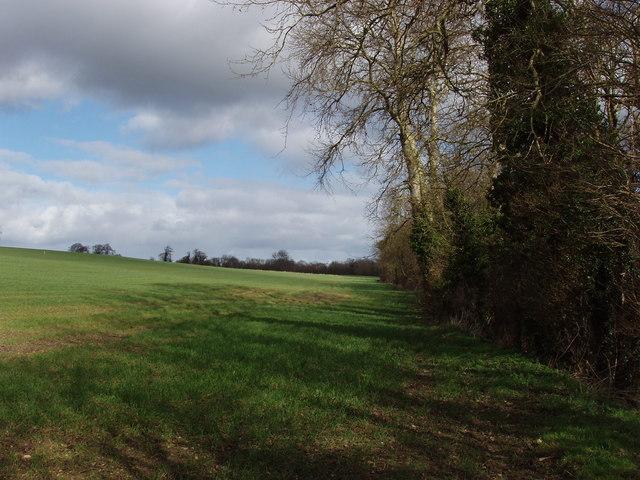 Field in Woodeaton