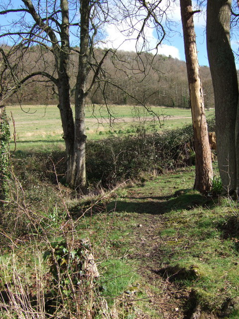 Orchard Wood from bridleway