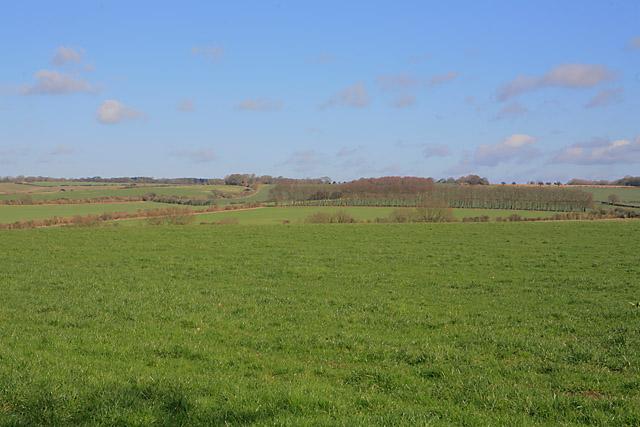 View from Wayfarer's Walk looking across field towards Chilton Wood