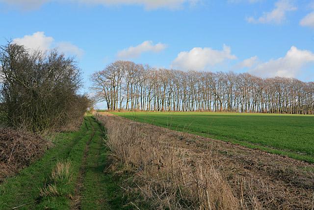 Wayfarer's Walk climbing Becket's Down