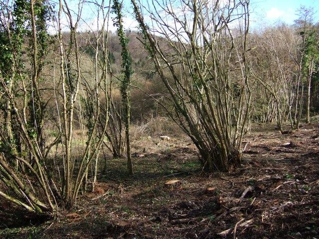 Lime Ridge Wood