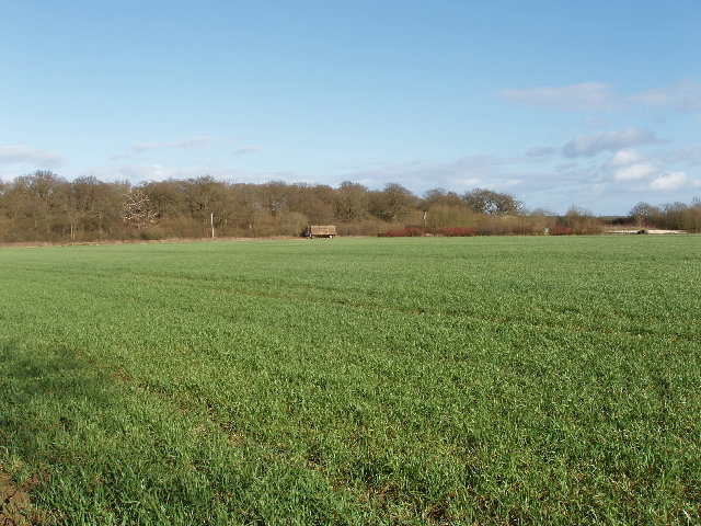 Wheat field and Stanton Little Wood