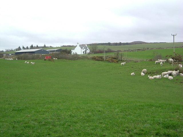 Big Park Farm and sheep