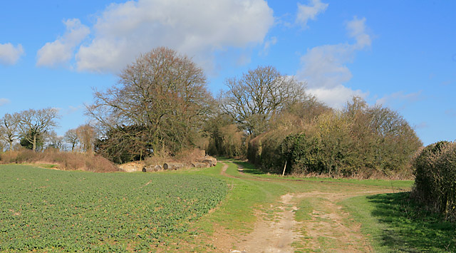 Wayfarer's Walk on Becket's Down