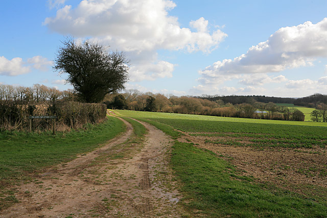 Looking towards Rucksters from Wayfarer's Walk on Becket's Down