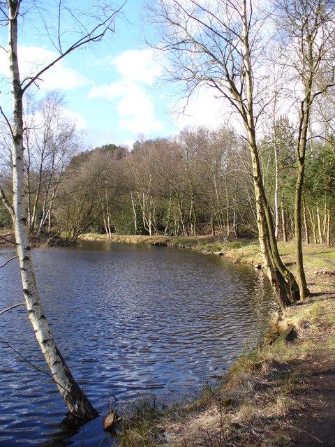East Bank of Kingsley Pond