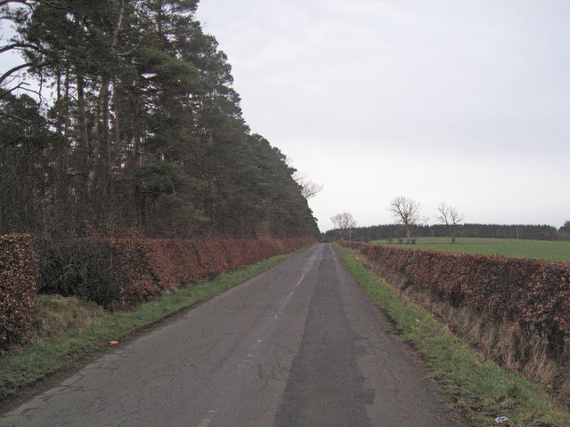 Road and Hedges 2