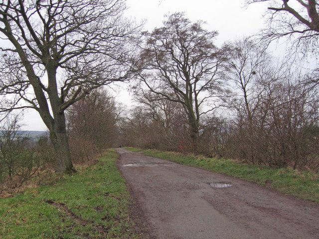 Near Glenside