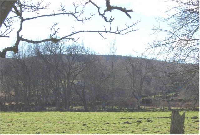 Wooded hill above Tillenteach