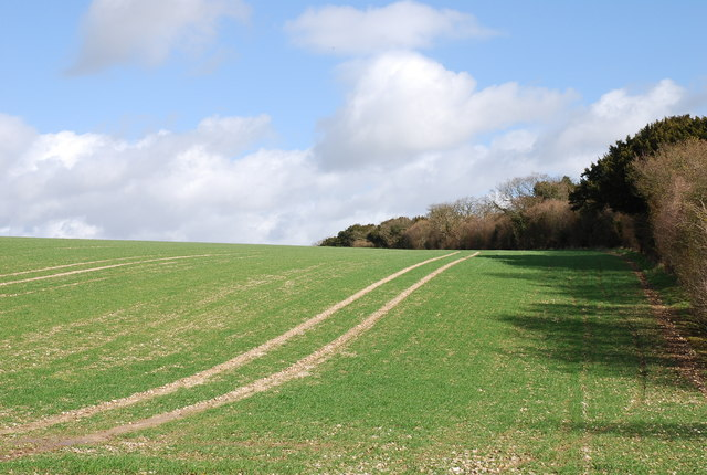 Wiltshire side of Grim's Ditch