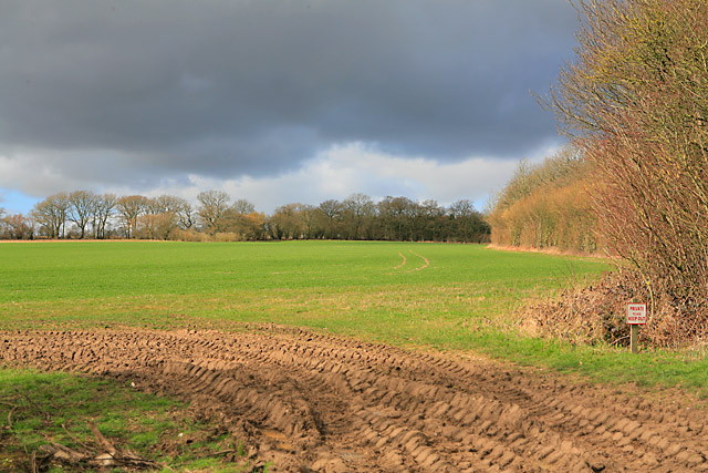 Looking along the edge of Upper Down Copse towards The Holt