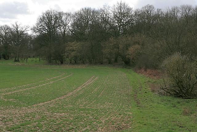 Bridleway entering northern edge of Furzedown (wood)