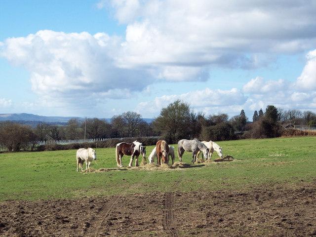 Horses enjoying hay, Tillington