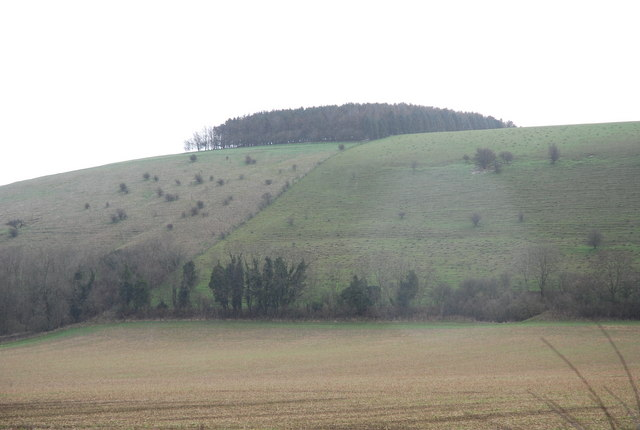 Trees atop of White Sheet Hill