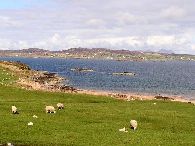 Spring Lambs by Loch Ewe
