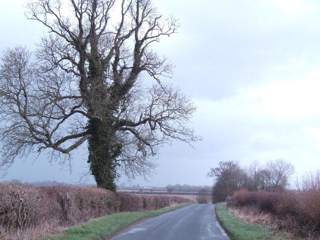 Siddington Lane