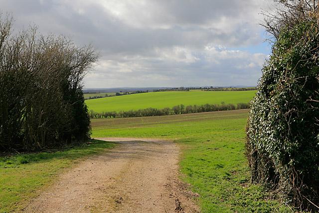 View of Woodmancott Down from bridleway