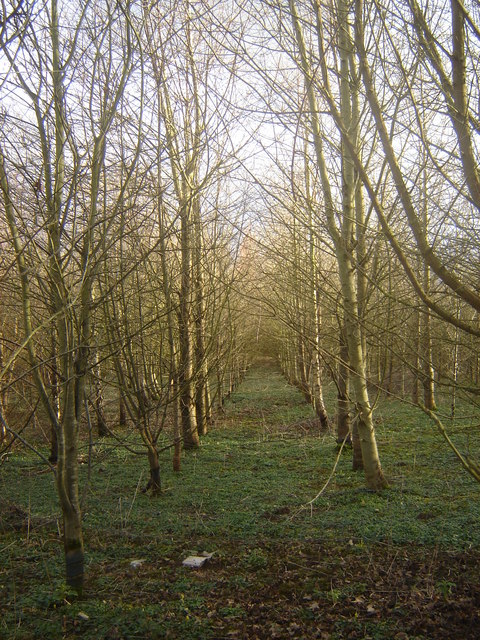 Woodland, Crick, Monmouthshire