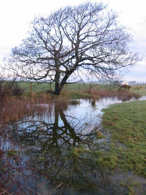 Waterlogged Field Edge