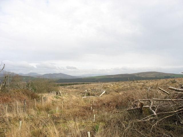 The north-western edge of the clear fell