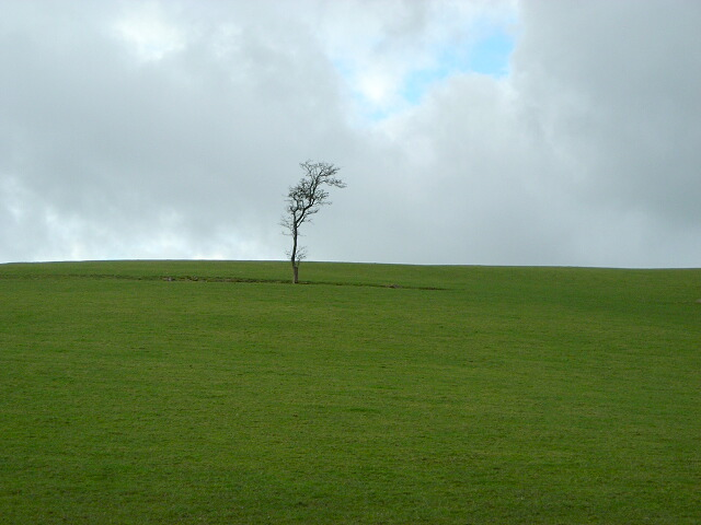 Lonely Tree on Hempland Hill