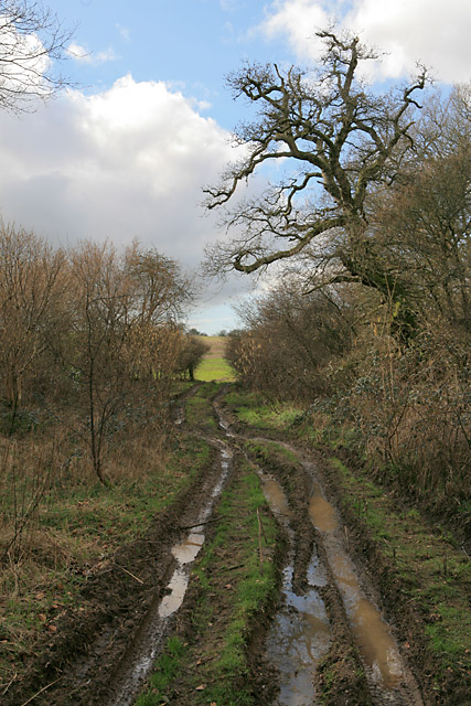 Byway emerging from Norn's Copse