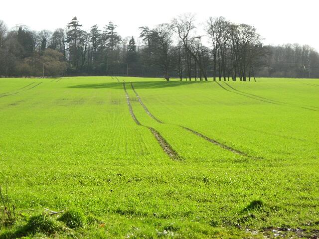 Field Near Kirkton