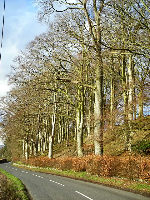 Bank Of Trees Between Kirkton and Duncow