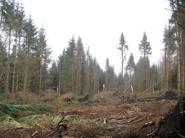 Storm damage, Berryhill