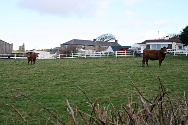 Seleggan Farm and Cattle