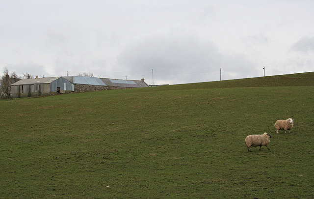 Sheep graze on the northern slopes of Berryleys Farm.