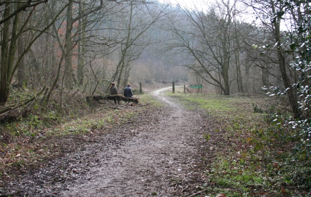 Forestry Commission Track in Frith Wood