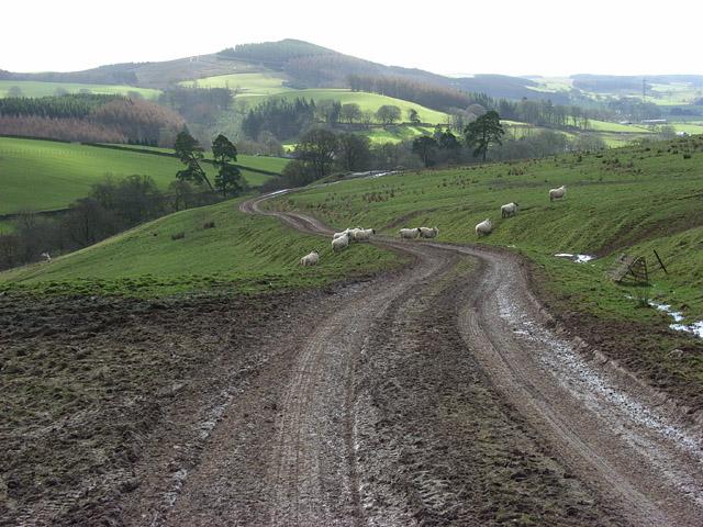 Track descending from Dundoran Plantation