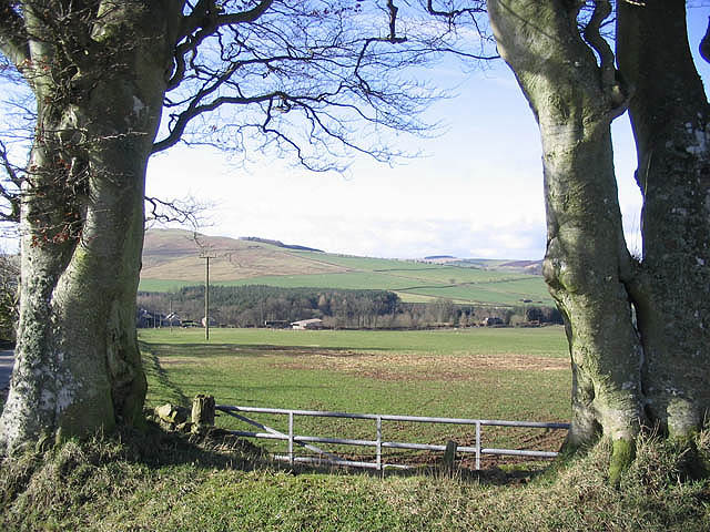 Beech trees and pasture field