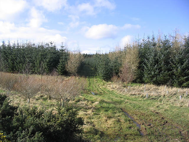 Ladfield Plantation