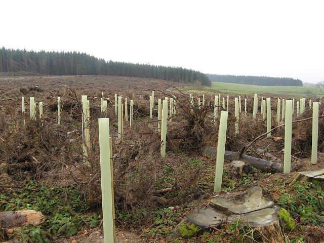Drumveigh Wood