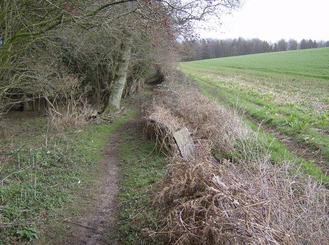 Footpath through Markwells Wood