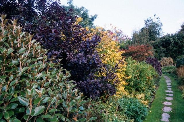 Garden, The Garden House, Buckland Monachorum