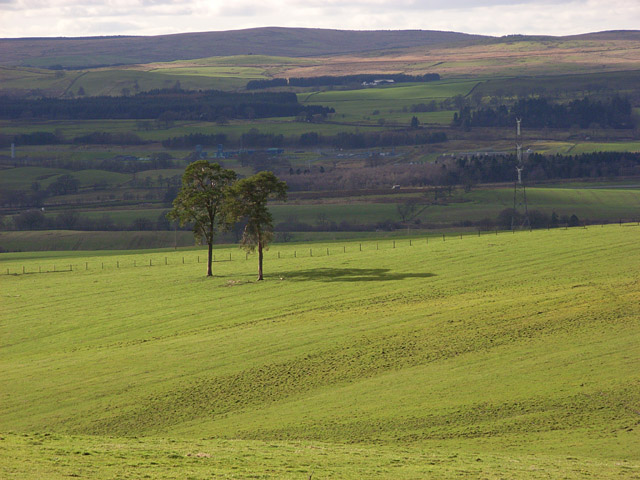 Trees in pastures above Annandale