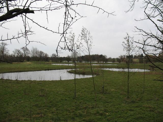 Wetland at Sutton upon Derwent